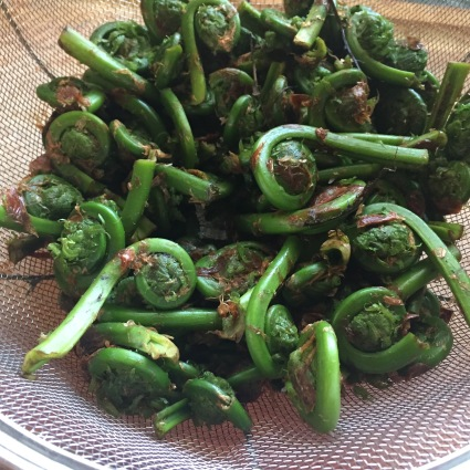 The papery residue on the outside of the fiddleheads needs to be rubbed off during the soaking.