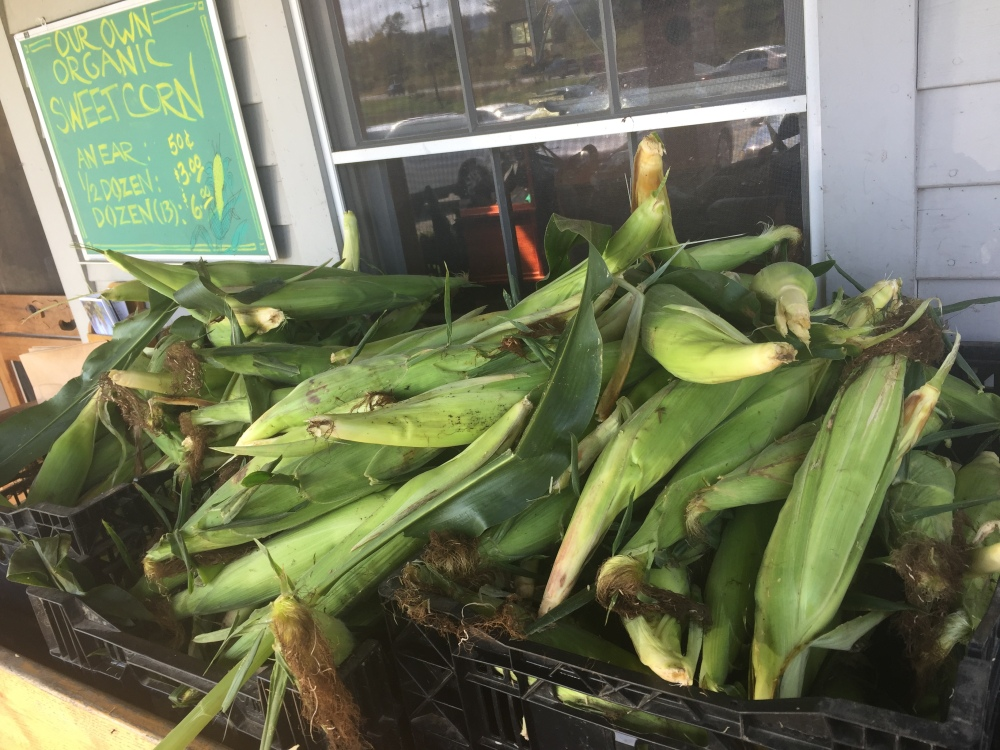 corn at farmstand